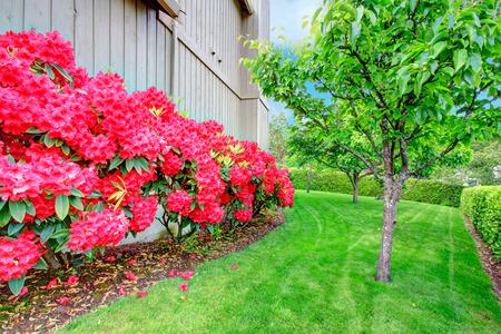 azaleas: Beautiful summer garden with blooming Azaleas