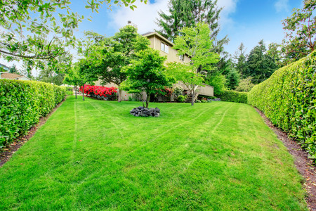 Green backyard garden with trees, trimmed hedges and blooming bushes