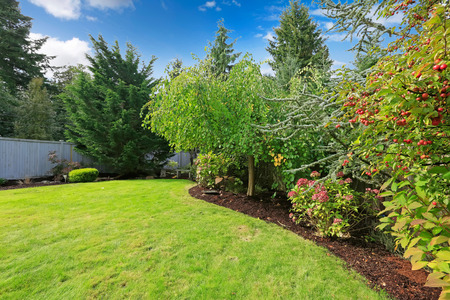 Backyard landscape with green lawn,trees, blooming bushes Imagens