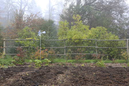 Countryside landscape  View of foggy rainy garden with garden bed during fall time photo