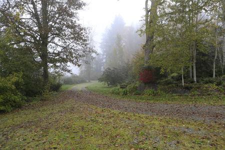 Gloomy and rainy forest with gravel road and birds on it during fall time