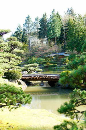 ponte giapponese: Bellissimo giardino giapponese verde durante il periodo estivo Vista del laghetto con ponte di legno su di esso