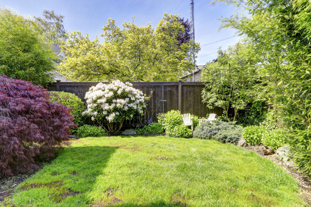 fenced: Fenced backyard with lawn, blooming rhododendron and bushes