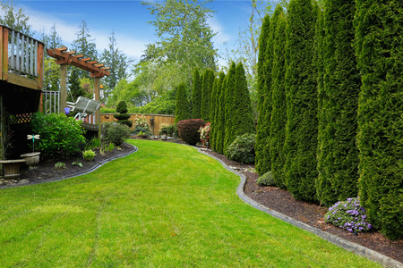 Fenced backyard with landscape. Decorative trees alongside with fence and green lawn. View of wooden deck with garden swing