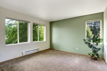 remodeled: White and green empty room with brown carpet floor. Room decorated with palm tree