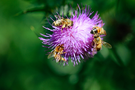 Bees collecting nectar. Close up view