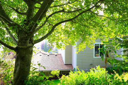 pitched roof: View of house from backyard garden. A pitched roof nesting box hanging on the tree Stock Photo