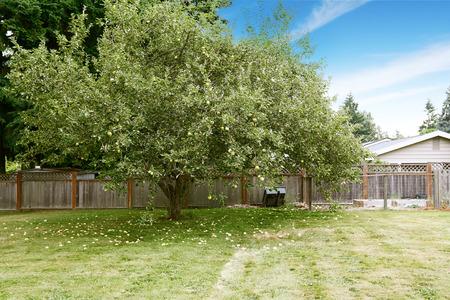 Apple tree growing on backyard. Countryside landscape