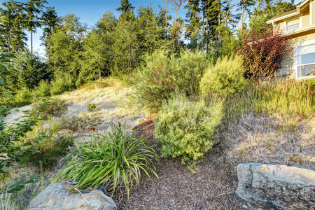 dry stone: Front yard hill with dry grass ans bushes. Ideas for landscape design