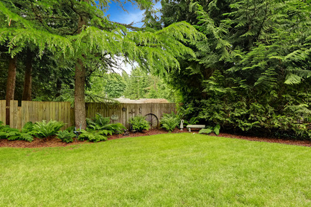 in the back: Green backyard area with wooden fence and decoration