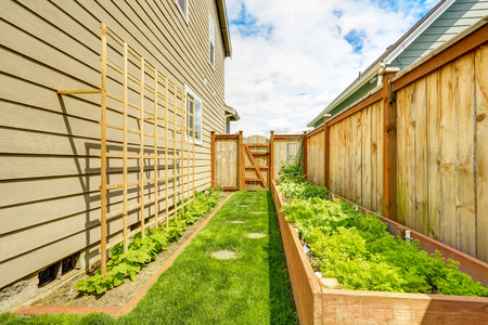 fenced: Fenced backyard with garden beds, wooden grid attached to the wall