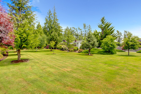 Landscape design. Spacious front yard landscape with lawn, trees and decorative bushes