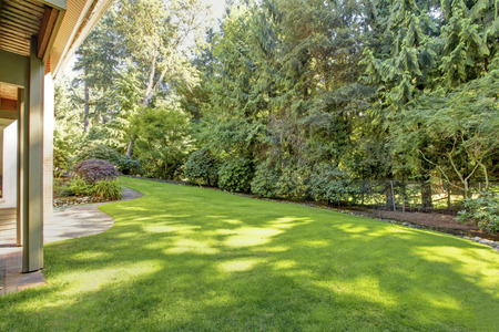 green back: Large open green back yard with spring green lawn