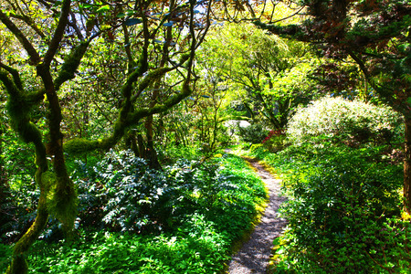 southern: Path Through the Forest, sunny day