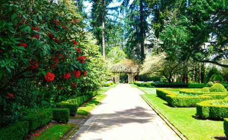 large tree: Path in a Peaceful Landscape Garden