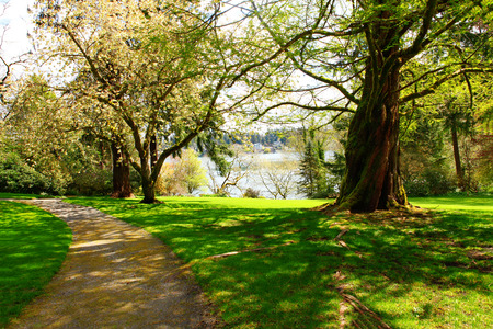 Peaceful Landscape Garden with big tree