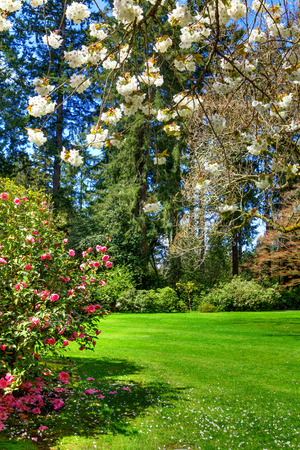 Green summer park garden with blue sky and flowers Stock Photo - 58328700