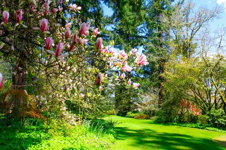 정원에서 벚꽃 핑크 트리 꽃