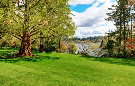 大きな木と平和な風景式庭園 写真素材