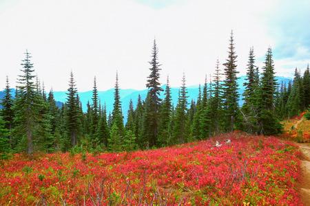 state park: Mount Rainier national park, Washington