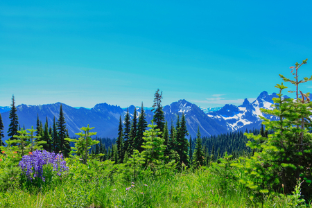 Summer Hike ner Mt.Rainier on Sunrise trail. Cascades with volcano and beautiful view of glacier. Stock Photo