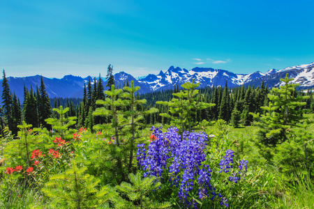 ner: Summer Hike ner Mt.Rainier on Sunrise trail. Cascades with volcano and beautiful view of glacier. Stock Photo