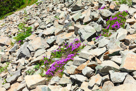 talus: Large rocks in Mount Rainier National Park