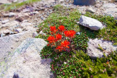man waterfalls: Hike trails with flowers on Mt Rainier