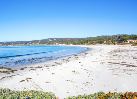 natural vegetation: Beach with Grasses and Flowering and other Natural Vegetation. Carmel, California Stock Photo