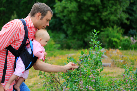 slings: Young father and baby with baby Sling Carrier picking up blueberries