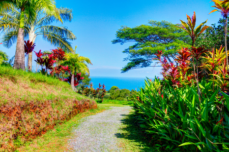 garden of eden: Palms in tropical garden with flowers and palm trees overlooking the ocean with blue sky. Garden Of Eden, Maui Hawaii