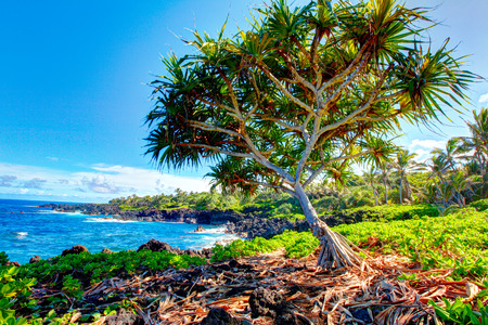 波が岩の上道路上の壮大なオーシャン ビューで晴れた日にハナ、マウイ島、ハワイ、アメリカ合衆国