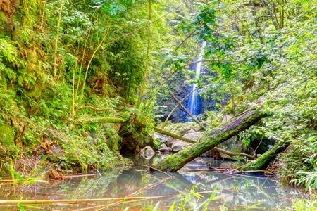 maui: Tropical jangles with waterfall and lake. Maui. Hawaii. Stock Photo