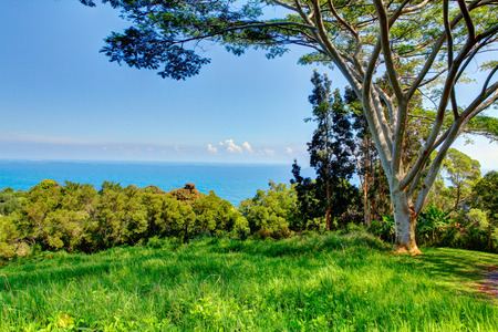 palm garden: A tropical garden with flowers and palm trees overlooking the ocean with blue sky. Garden Of Eden, Maui Hawaii