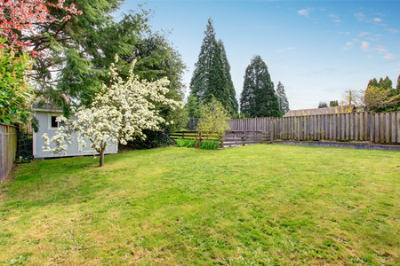 fenced: Fenced backyard with grass filled garden and small shed. View of blooming trees.