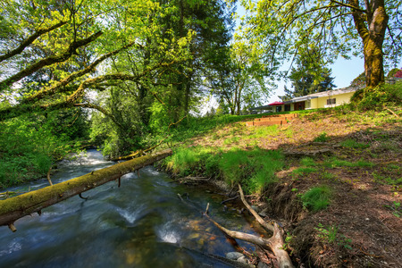rambler: Mountain river view in green back yard of American rambler. Lots of mossy trees by the water. Stock Photo