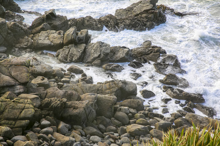 shore: Seals on a rocky coastline in Westport, New Zealand.