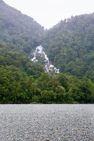 westland: Westland National Park. New Zealand.