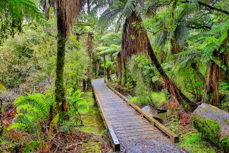 Small wooden bridge in the rain forest. Fox Glacier, South Island, New Zealand .