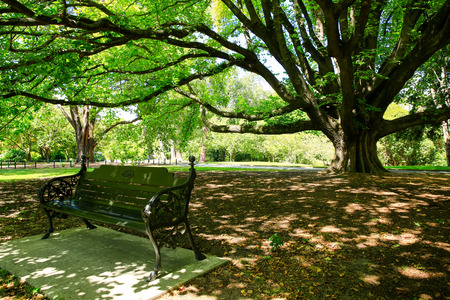 christchurch: Majestic tree in Christchurch Botanic Garden, New Zealand .Nice seat in the shade of large tree.