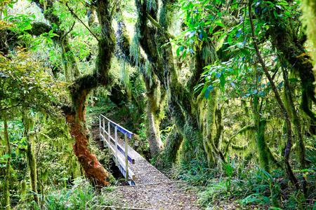 egmont: Wooden bridge in Rain forest with trailing moss and gnarled trees, Egmont National Park, Taranaki, North Island, New Zealand Stock Photo