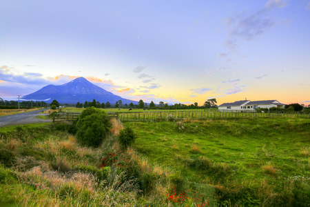 dormant: New Zealand landscape with farmland and grazing cows on background volcano Taranaki.