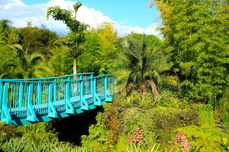 tourist feature: Hamilton Gardens tropical garden. Hamilton, New Zealand.