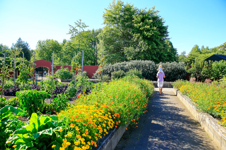Raised flower beds in Kitchen garden, Hamilton gardens, New Zealand 版權商用圖片