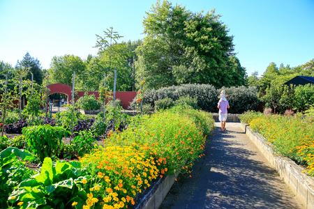 Verhoogde bloembedden in Moestuin, Hamilton tuinen, Nieuw-Zeeland Stockfoto