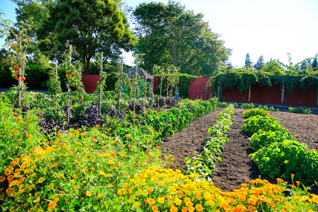 Raised vegetable beds in Kitchen garden, Hamilton gardens, New Zealand Editorial