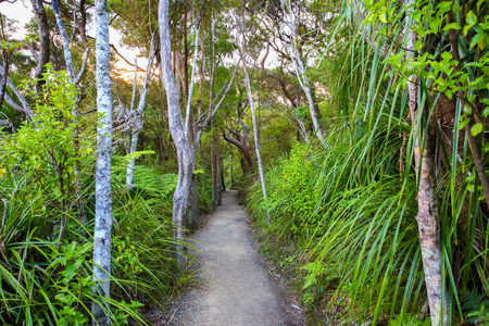 shrubs: Forest path surrounded by trees and bushes, Mount Manaia, New Zealand