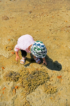 nz: Little girl with her feet in the water playing with seaweed. Russell Long Beach, Bay of islands. NZ