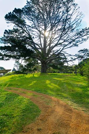 roble arbol: roble gigante con hojas artificiales en Hobbiton. Foto de archivo
