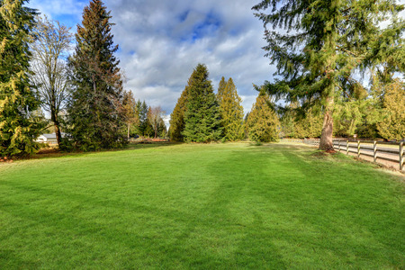 comfortable: Spacious fenced backyard filled with green grass and large fir trees around. Northwest, USA Stock Photo